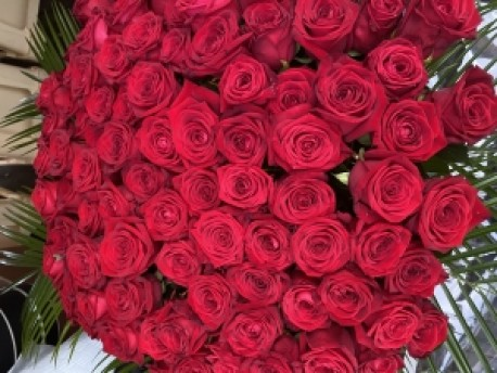 100 Best Red Roses